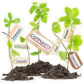 Plant Label Concept