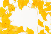 Background Yellow ginkgo leaves on a white