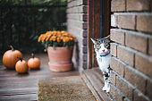 Tabby cat on a porch