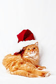 Ginger cat  in red Christmas hat lies on bed. The fluffy pet comfortably settled to sleep. Cute New Year cozy background. Symbol of holiday celebration.