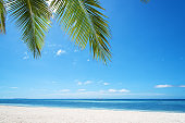 Tropical paradise beach with palm leafs
