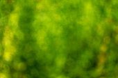 Abstract defocused green nature background
