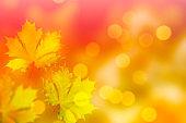 bright colorful foliage.