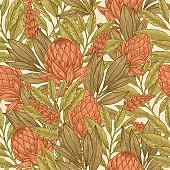Floral seamless pattern. Protea vintage background. Vector illustration
