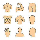 Male body parts icons