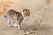 Little cute kitten kitty cat pet animal.
