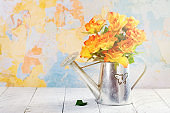 Roses in a zink watering can
