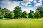 Bright summer sunny day in park with green fresh grass and trees.