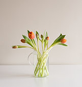 Orange tulips in vase
