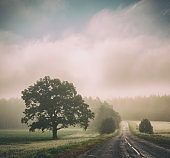 Autumn Landscape. Road in Fog. Trees Silhouettes.