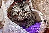 cat in the package at home. curiosity cat
