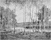 Antique photo of paintings: Landscape