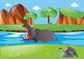 Hippo swimming in the river