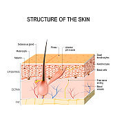 Healthy Human Skin