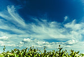 Landscape plants and sky with clouds