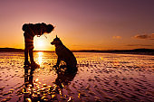 Girl playing with german shepherd dog at a beach