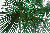 natural backdrop with palm leaves