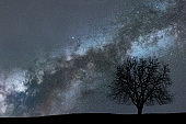 Milky Way and tree. Night landscape. Space background.