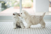 Cute kitten and puppy playing