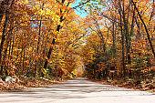 Autumn scene with road