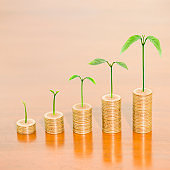 Tree growing on one dollar coins arranged as a graph on wooden table, concept of business growth