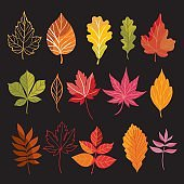 set of autumn leaves on black background