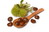 chestnut pile with hedgehog - white background - closeup