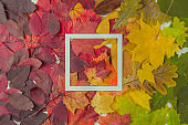 Creative layout made of flowers and leaves with paper card note. Flat lay. Concept of autumn nature
