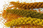 Sprigs of different varieties of millet on a white background