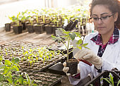 Biologist with sprouts and lab equipment