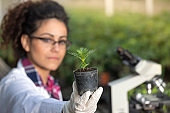 Biologist holding sprout in flower pot