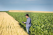 Farmer in corn field with tablet