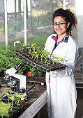 Biologist holding tray with seedlings