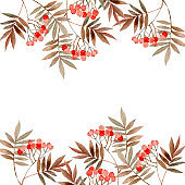 watercolor illustration with branches Rowan, Hello autumn