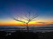 Silhouette tree beach sunset at Phuket Thailand