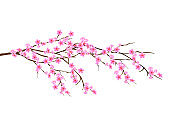 Horizontal spring branch of cherry blossoms, sakura with with pink flowers