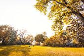 autumn park at dusk