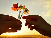 Hand gives a flowers with love at sunset.