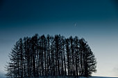 Winter Pine Forest, Flight Concept and Venus