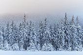 Fantastic winter landscape. On the eve of the holiday. The dramatic scene. Carpathian, Ukraine, Europe. Happy New Year