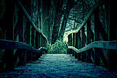 Gloomy and tenebrous forest