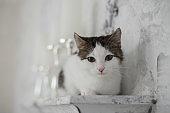 Cute kitten in cozy home interior
