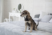 Cute puppy in cozy home interior