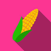 Corn icon flate. Singe vegetables icon from the eco food flate.