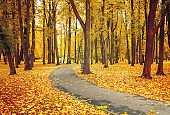 Autumn landscape with bright autumn trees and orange fallen leaves. Autumn deserted park alley