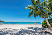 Palm tree on tropical beach background