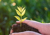Young green plant in the hands. New life. Ecology concept