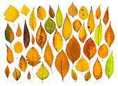 Colorful autumn leaves pattern on white background
