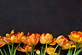 Holidays still life with colorful tulips