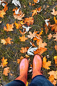 Legs in rubber boots on a background of red-yellow-orange autumn maple leaves on green grass. Top view. The concept of a healthy lifestyle, walking in the air. retro film toning